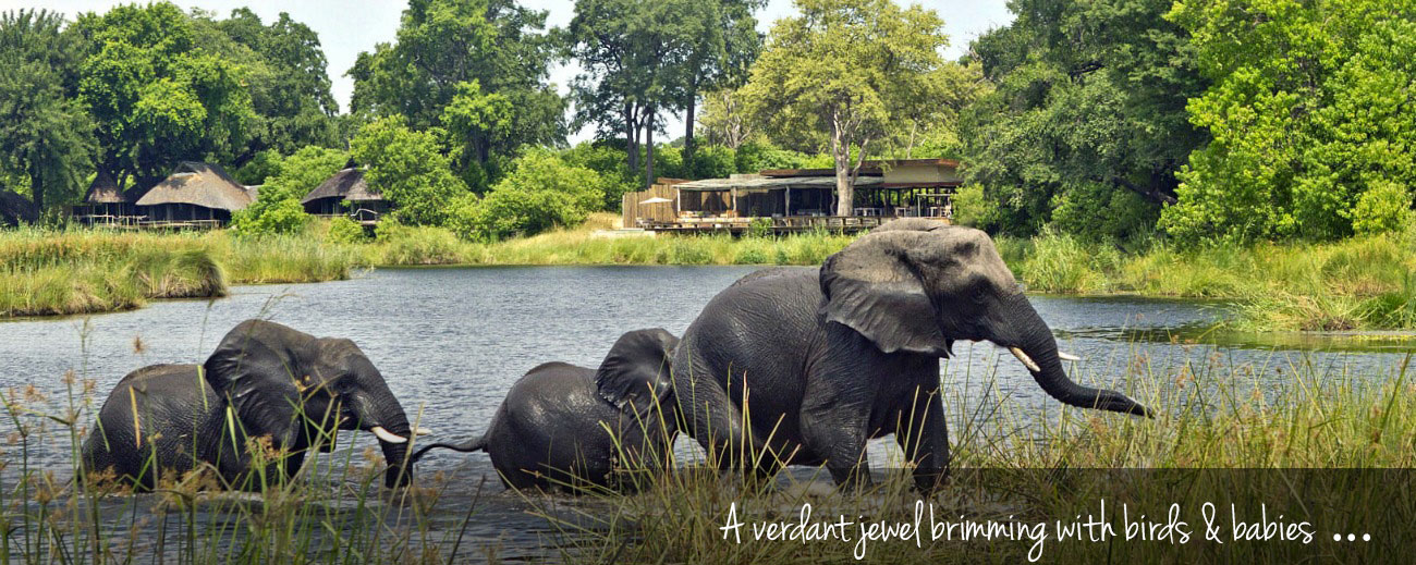 No Rain, No Gain: Why Travel to Botswana in the Green Season