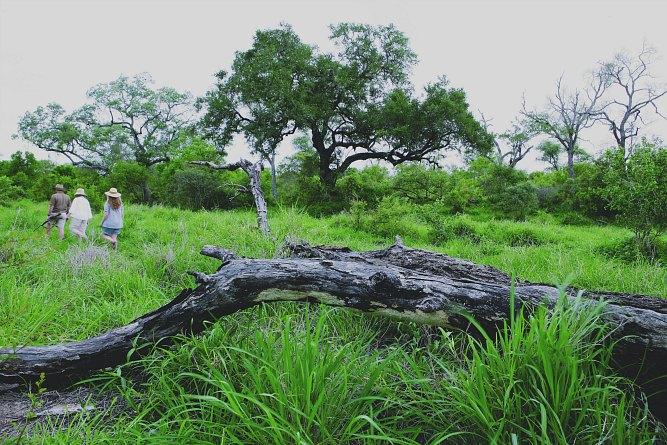 Is the Sabi Sands good for safari?