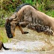 How to Plan & Book a Wildebeest Migration Safari