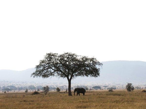Serengeti Kati Kati Camp