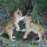 What to expect at Laikipia and Lewa in Kenya - similar