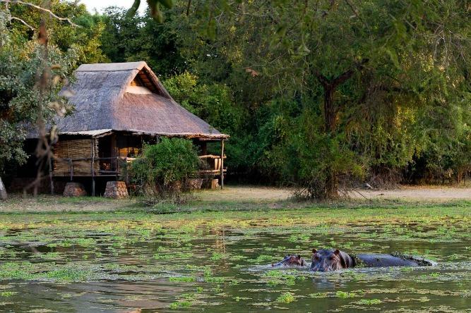 African lodges where animals roam free Mfuwe