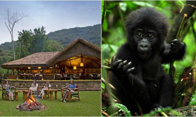 Sanctuary Gorilla Camp
