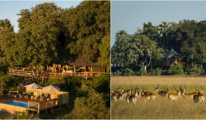 African Lodges where animals roam free
