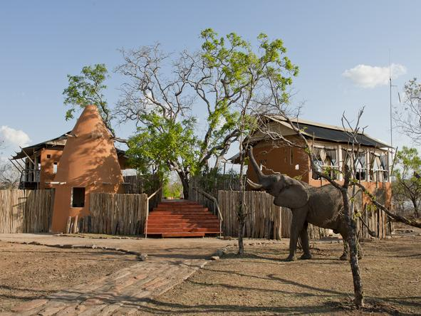 Amara Selous - elephant outside camp