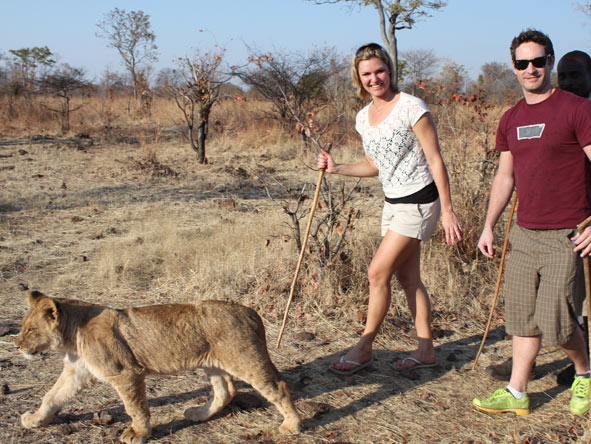 Ashley Groenevelt - walking with lions at Victoria Falls