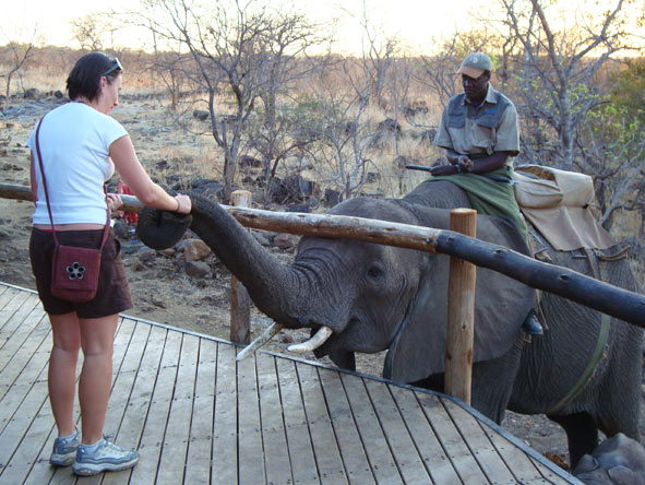 Bonita Cronje - elephant feeding time!