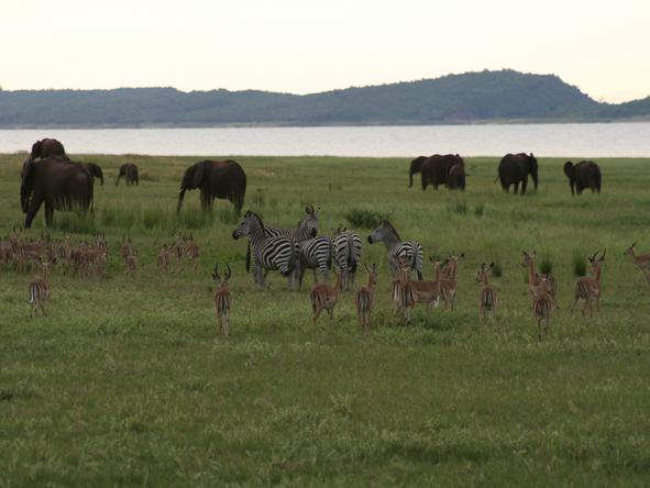 Bumi Hills Safari Lodge - Wildlife