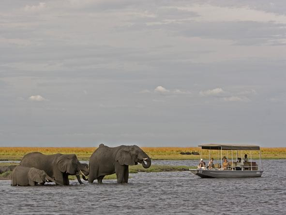 Chobe Chilwero - spot elephant on a boat excursion