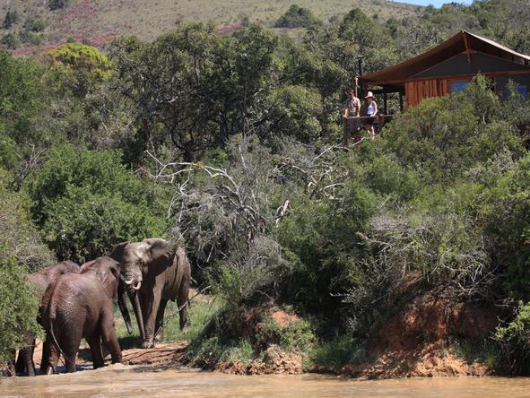 Elephant Safari Lodge - Exterior