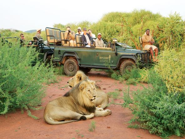 Impodimo Game Lodge - Game Drive