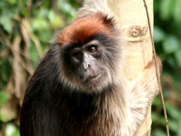 Kibale Forest Camp - monkey