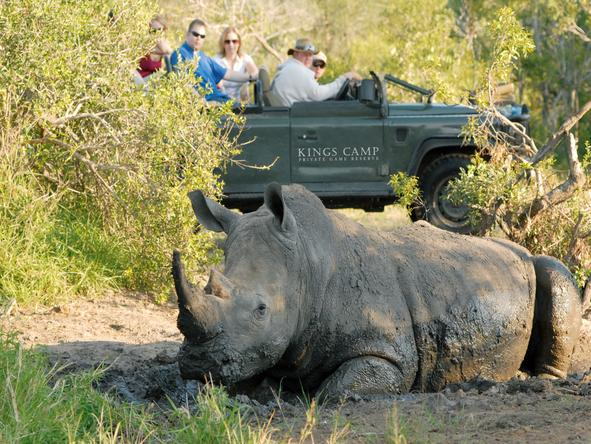 Kings Camp Private Game Reserve - Game Drive 2