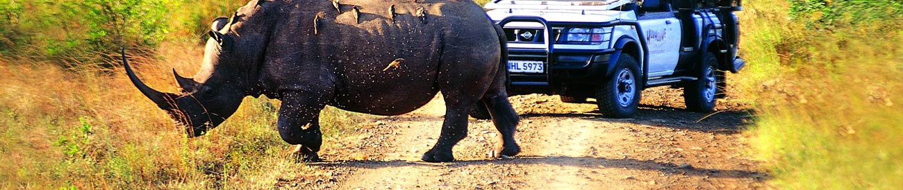 KwaZulu-Natal Safaris - offering some of the best Big 5 game viewing in South Africa; a KwaZulu-Natal safari easily combines with a beach holiday.