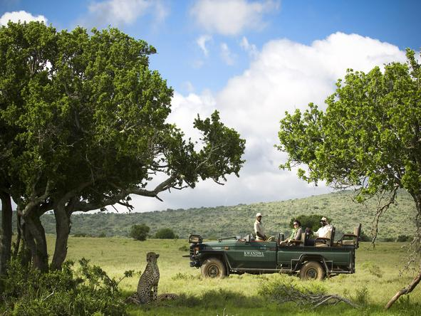 Go on a game drive with one of the experienced guides and experience beautiful wildlife