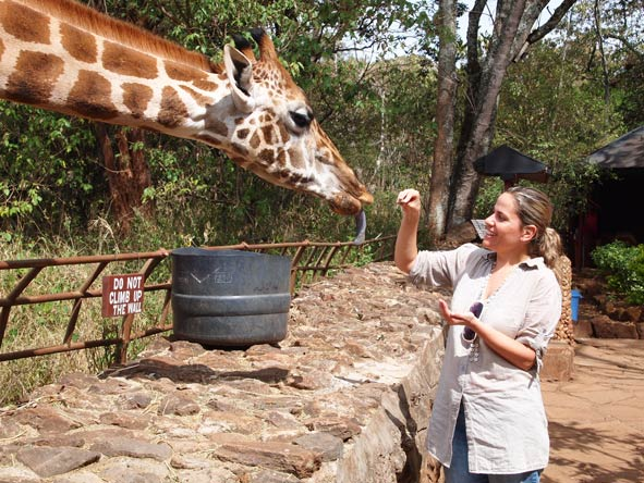 Liesel van Zyl - feeding the friendly giraffes of the Nairobi Giraffe Centre