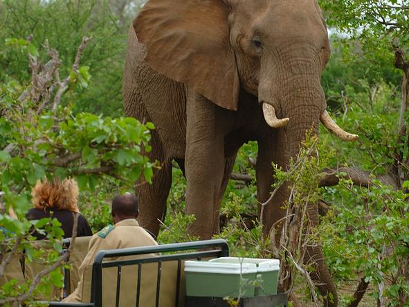 Mashatu Tented Camp - Game Drive 3