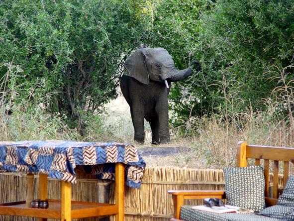 Mwamba Bush Camp - Wild Visitors