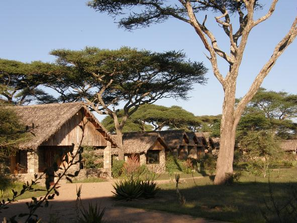 Ndutu Safari Lodge - Lodge