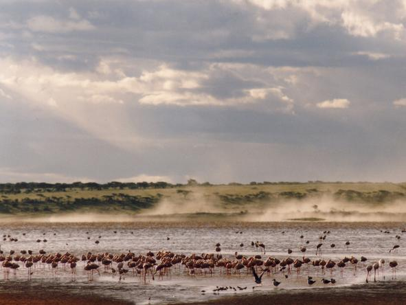 Ndutu Safari Lodge - Birdlife