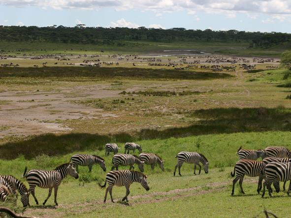 Ndutu Safari Lodge - Wildlife