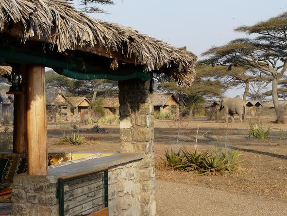 Ndutu Safari Lodge - View Cottage