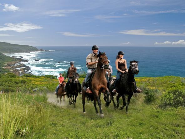 Pezula Resort Hotel and Spa - Horse Riding