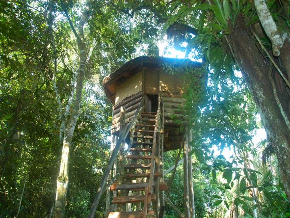 Primate Lodge - Treehouse
