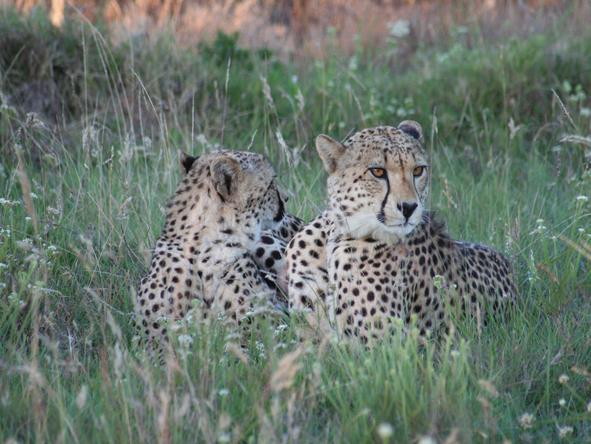 Pumba Msenge Bush Lodge - Wildlife