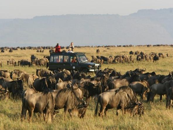 Rekero Camp - Game Drive