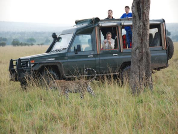 Royal Mara Safari Lodge - Game Drive