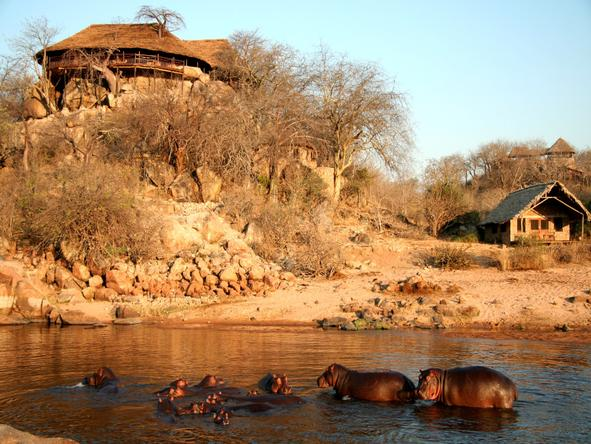 Ruaha River Lodge - Wildlife
