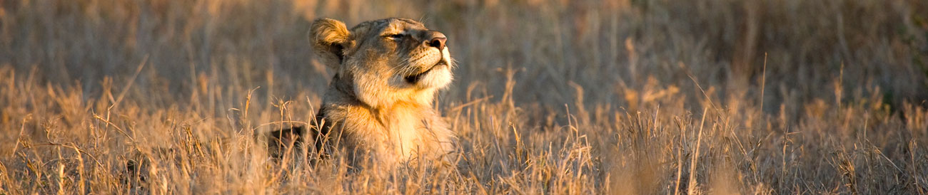 South Africa Safari - from the legendary Kruger Park to malaria-free Madikwe & the beautiful Eastern Cape, South Africa's reserves offer phenomenal big game viewing.
