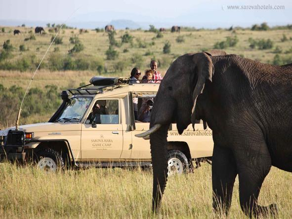 Sarova Mara Game Camp - Game Drive