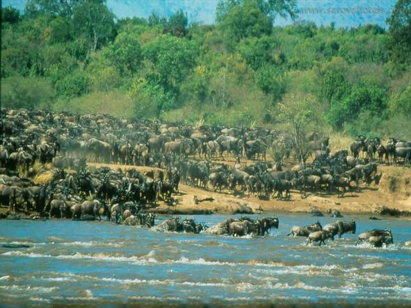 Sarova Mara Game Camp - Wildlife
