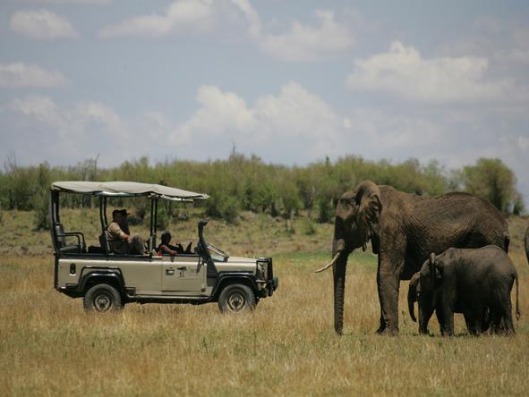 Saruni Mara - excellent Big 5 game viewing