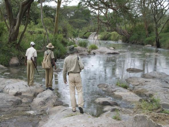 Serengeti Migration Camp - bush walk