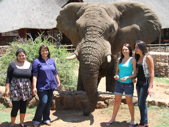 Sharlaine Assur - interacting with one of the huge elephant bulls at Pilanesberg National Park