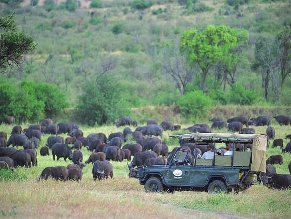 Siana Springs Tented Camp - Game Drive