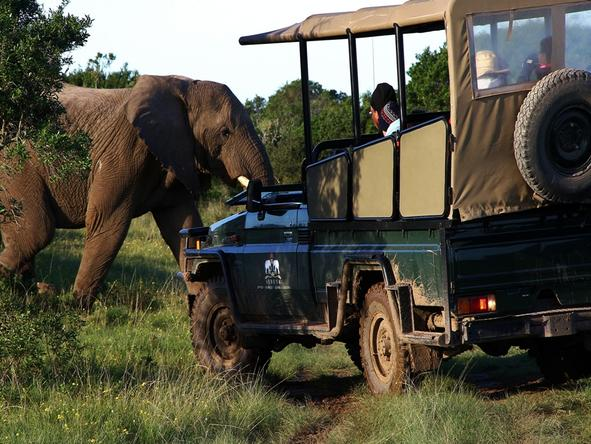 Sibuya River Camp - Game Drive