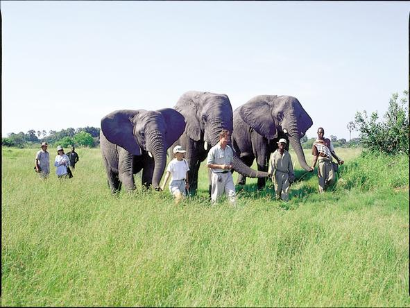 Stanleys Camp - Elephant Walk