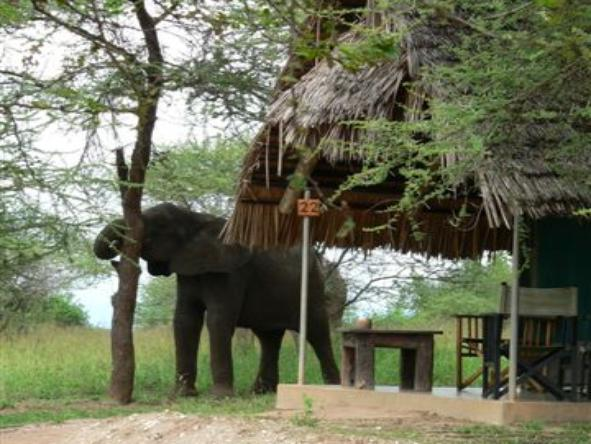 Tarangire Safari Lodge - Wildlife