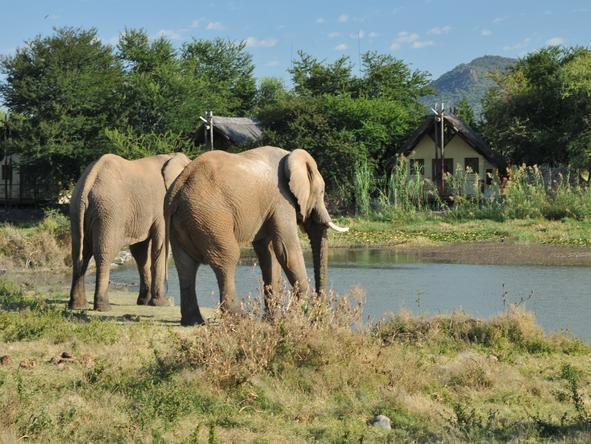 Tau Game Lodge - Elephants