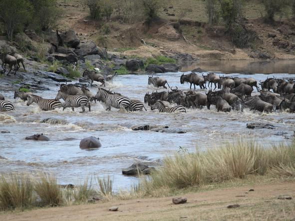 Tipilikwani Mara Camp - Wildlife