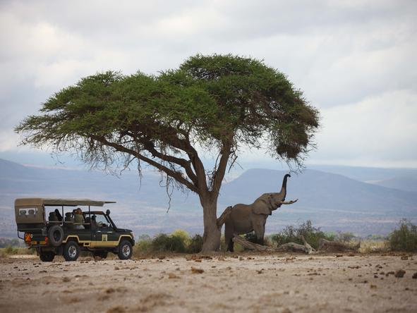 Tortilis Camp - game drive + elephant