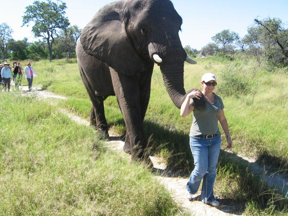 Tracy Payne - walking with one of the elephants at Abu Camp in Botswana