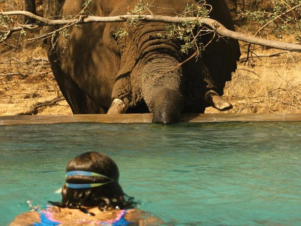 Tuningi Safari Lodge - Pool/Wildlife