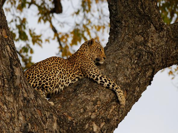 Ulusaba Cliff Lodge - Wildlife