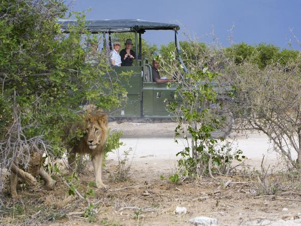 Villa Mushara - Game Drive