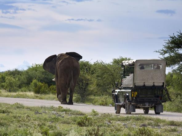 Villa Mushara - Game Drive2